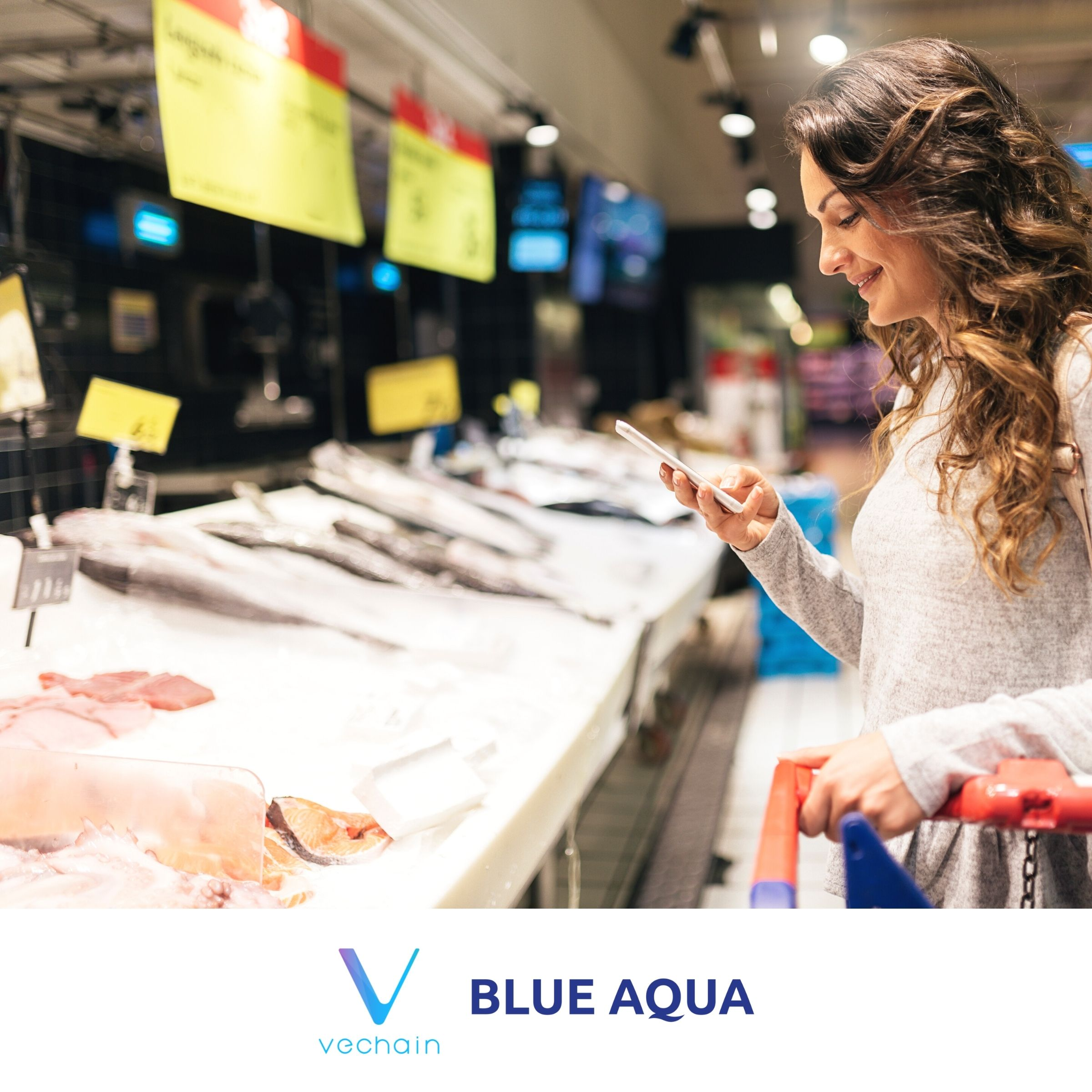 Blue Aqua partners up with VeChain to adopt blockchain traceability in shrimp farming